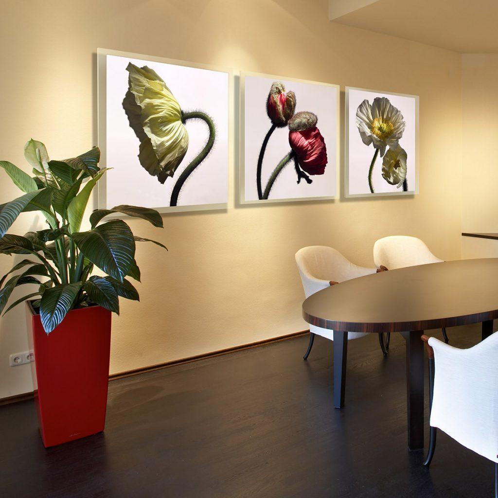 Fotokunst-Bilder zum Mieten-Kunstmiete